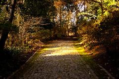 Path (joaop_21) Tags: park travel winter light nature forest nikon colorful afternoon path visit sharp automn porto dreams 1855mm nikkor floresta wandering oporto wander caminho serralves portgual d3200