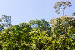 Forest Canopy - Belize (JGMarshall Photography) Tags: travel trees sea tree green bird latinamerica nature leaves birds america forest canon photography leaf interesting rainforest belize wildlife adventure explore jungle caribbean belizecity dslr centralamerica joemarshall britishhonduras jgmarshall