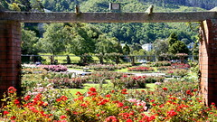 Rose Garden, Wellington