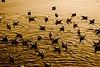 Wait (leonheartk) Tags: seagull gull sony 135mm sal135f18za