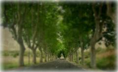 FRANCE - Provence, Platanen-Allee , focus-effect, 4643 (roba66) Tags: travel trees france texture tourism reisen frankreich urlaub central visit explore provence francia bäume franca voyages allee efecte textur platanen provenca platanenalle roba66