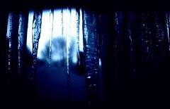 Winter VI (Josh Rokman) Tags: winter snow macro ice nature