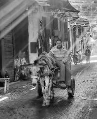 F010792_02 (fotoliber) Tags: marrakech marroc marruecos