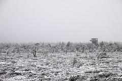 Schwarzes Moor (deja) Tags: schnee winter snow germany deutschland rhn blackmoor schwarzesmoor rhnmountains