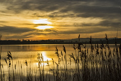 Golden ponds (garry q) Tags: city urban black ford water rural river photography allan scotland moss ancient long framed stirling country central picture estuary canvas forth devon loch towns tidal trossachs kincardine rises ard firth flanders katrine voil aberfoyle airth carse flows fallin kelty teith eastward cambus mountainous alloa lubnaig venachar themighty duchray life2015