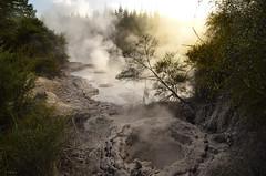 Mud Pool, Rotorua (clasch) Tags: newzealand nature pool fog sunrise l
