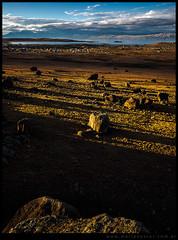 Campo de rocas