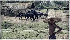 Rural scene #2 (foto_morgana) Tags: people india hat rural asia outdoor character hut waterbuffalo lightroom on1 berhampur conicalhat persoonlijkheid karakter nomodelrelease caractre odisha travelexperience ononephotos editorialonly ganjamdistrict on1effect10suite