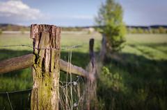 Green Fence (steb.photography) Tags: green field fence landscape spring hessen landschaft frhling wieseck giesen