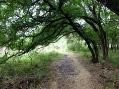 trees bent over_50617 (San Marcos Greenbelt Alliance) Tags: flowercloseups ringtailridge sanmarcosgreenbeltalliance smgaphotobylancejones