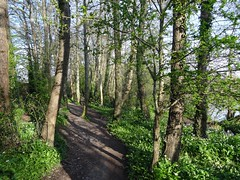 The well travelled path (Phil Gayton) Tags: uk river path devon footpath dart totnes wildgarlic ramson