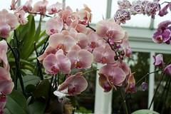 Orchids (JenGallardo) Tags: nyc newyorkcity plants newyork orchids bronx nybg newyorkbotanicalgarden bronxbotanicalgarden
