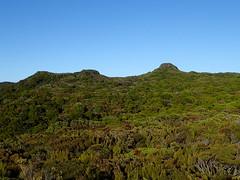 Summit Rock from Observation Rock (dracophylla) Tags: newzealand codfishisland whenauhoa