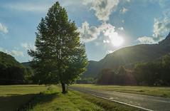 (Okan AKGL) Tags: tree road journey landscape clouds sky turkey yedigller a58 sony