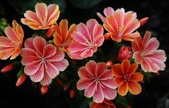 little Flowers (Hugo von Schreck) Tags: flower macro blume makro blten onlythebestofnature tamron28300mmf3563divcpzda010 canoneos5dsr hugovonschreck