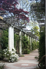 pergola springI (nenecristiana) Tags: plants garden pergola infocus highquality