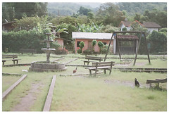 Parque de Gallinas (Patrick J. Negwer) Tags: dog naturaleza verde green dogs nature water rio river waterfall ecuador agua perro perros cascadas mindo nambillo