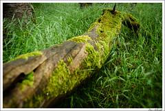 20160526-050_Verschiedenes.jpg (schmilar77) Tags: jahreszeit natur pflanzen landschaft wald baum frhling baumstamm bildbeschreibung
