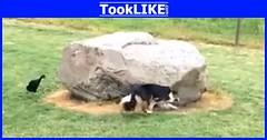 เป็ดวิ่งเล่นไล่จับกับสุนัข (tooklikedotcom) Tags: วิ่งเล่นไล่จับ สุนัข เป็ด
