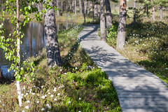 IMG_1776-2 (greta&eos) Tags: lake plant nature swimming path walkway swamp boardwalk