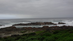 Coast at Storms River Mouth (Rckr88) Tags: ocean africa travel sea nature water southafrica outdoors coast south coastal greenery coastline gardenroute tsitsikamma westerncape rockycoastline tsitsikammanationalpark stormsrivermouth