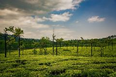 Greenary , Valparai (Premnath Thirumalaisamy) Tags: teaestate teaplantation valparai greenary green skies cloudy ghat