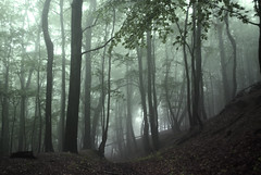 Witch Doctor... (bas.handels) Tags: wood trees mist nature leaves fog moody forrest outdoor faded