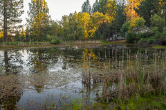 RHM_2442-1533.jpg (RHMImages) Tags: california trees foothills house water reflections landscape us nikon unitedstates sierranevada grassvalley nevadacounty d810 dogbarroad bylt bearyubalandtrust mathispond