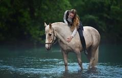 Dreaming (Hestefotograf.com) Tags: summer horse white norway caballo cheval cavalo pferd stallion whitehorse equine equus paard purarazaespanola hestefotograf