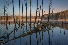 See Monster (ludwigriml) Tags: morning blue trees lake fog sunrise dead moss forrest mangrove morningsun deadtrees morningfog naturallightphotography ludwigrilmlphotography ludwigrilmlnaturallightphotography ludwigrilmlnaturallightphot