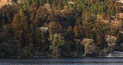 Autumn (OrangeK7) Tags: autumn brown fall forest landscape woods lakeshore