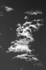 Fragments 2 (Zelda Wynn) Tags: newzealand weather blackwhite wind auckland artgalleryofnsw cloudscape troposphere updraft equivalents artgalleryofnewsouthwales inspiredbyalfredstieglitz