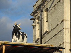 It's friesian out here (janeslondon) Tags: road london animal statue cow milk horn holloway friesian n7 gwl guzel