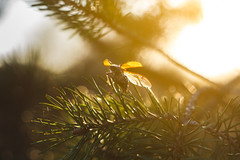 Maybug (Alexander Lukinsky) Tags: light sun haze may m42 helios helios44m maybug sovietlens  canon450d 44 42 44