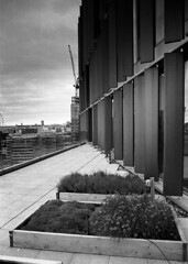 """Raised Beds"" (blueP739) Tags: london clouds scanner olympus peony londonskyline om4 om2n om1n om2sp om3ti plustek7200 aculux3 kentmere100"