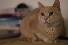 mamma rosa (antonyshaw) Tags: cats pentax smc gatti smca50mmf17 k30 mammarosa