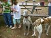 GreyhoundPlanetDay2008053
