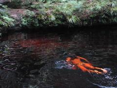 Forest Pool (AndrewSMurray) Tags: sarawak bako bakonationalpark borneo2011