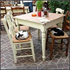 Kreta cats (Ellen Ribbe) Tags: cats kreta crete katzen