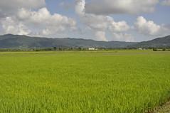 sawah padi (bung_zul) Tags: malaysia kg langkawi padi kedah sawah tok perkampungan senik makam mahsuri bungzulphotostream