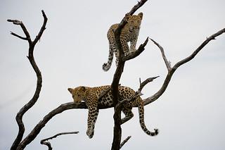 Botswana Okavango Delta Photo Safari 56