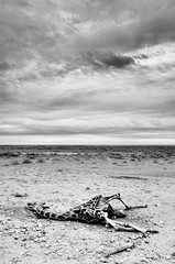 Ex (TheOne87) Tags: ocean africa park street sunset sea portrait sky blackandwhite bw italy parco cloud bird nature water birds animal landscape dead death blackwhite nikon italia shot cloudy photos picture bn uccelli morte pan nikkor pali namibia nord biancoenero etosha giraffa oceano atlantico orizzonte walvisbay afric pellicani bianoenero flickraward d5100 mygearandme