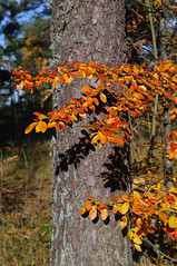 Vrviline sgis (Jaan Keinaste) Tags: autumn tallinn estonia pentax eesti sgis k7 mustame vrviline pentaxk7 vrvilinesgis