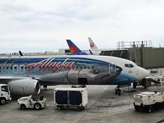Alaska Airlines N559AS (kenjet) Tags: fish ramp gate salmon theme honolulu boeing 737 hnl alaskaairlines livery 737800 honoluluinternationalairport salmonthirtysalmon phnl as 737890 n559as wildalaskaseafood salmonthirtysalmonii
