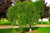 árbol (vitofonte) Tags: park parque naturaleza tree verde green nature garden landscape arbol natureza natura paisaje pamplona navarre jardín navarra vitofonte vigilantphotographersunite vpu2 vpu3 vpu4