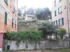 Immagine 579 (en-ri) Tags: verde case genova zena piante palazzi casetta cortiletto