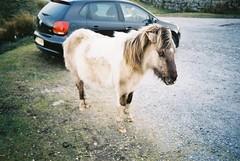 Pony on Dartmoor - Bellever Tor (imogencallaway) Tags: park bridge white black cute grass car volkswagen cherry lomo lca lomography eyes ears pony tor fujicolor200 dartmoor polo hoofs fujicolor bellever