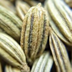 pakistan macro asia explore flickrcentral punjab fennel... (Photo: viralstile on Flickr)