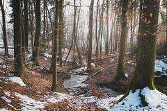 Beim Drrbach (Andris Linz | Photography) Tags: schnee trees winter snow tree water misty creek forest schweiz switzerland wasser laub bach wald bume baum solothurn langendorf drrbach neblig rttenen