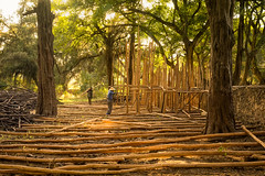 Forest Bleachers (departing(YYZ)) Tags: africa wood travel people building male men zeiss forest 35mm outside construction labor sony logs labour worker bleachers fe ethiopia alpha a7 lumber stands eastafrica gondar sonnartfe35mmf28za